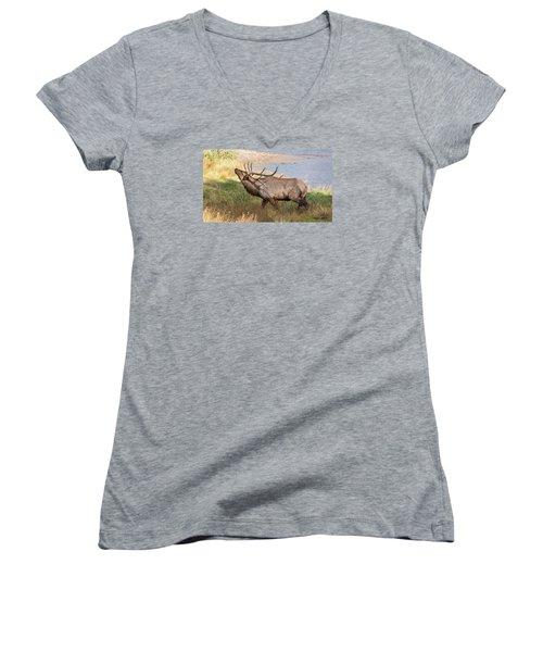 Seven Point Elk Bugling Women's V-Neck T-Shirt (Junior Cut) by Stephen  Johnson