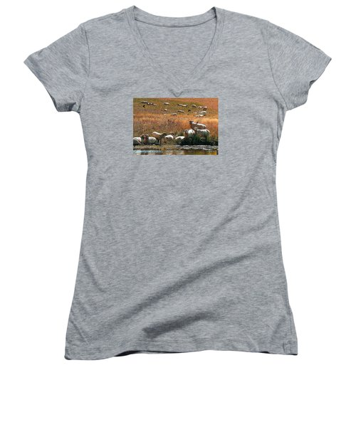 Sheep Country Women's V-Neck T-Shirt (Junior Cut) by Deborah Moen
