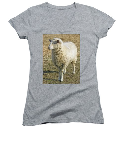 Sheep Women's V-Neck T-Shirt (Junior Cut) by James Larkin