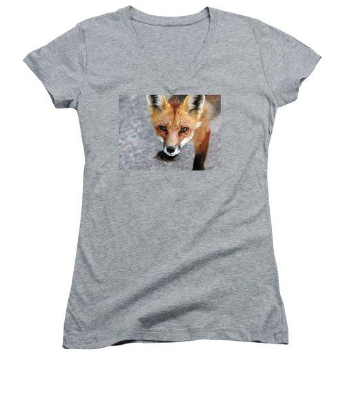 Shy Red Fox  Women's V-Neck T-Shirt (Junior Cut) by Debbie Oppermann