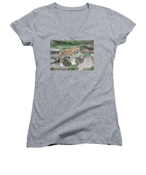 Siberian Tiger Women's V-Neck (Athletic Fit)
