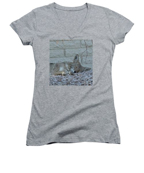 Women's V-Neck T-Shirt (Junior Cut) featuring the photograph Sleepy Li'l Coyote by Anne Rodkin