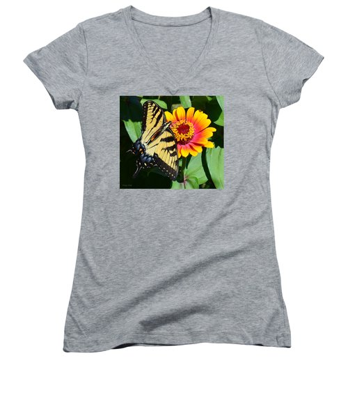 Snacking Tiger Swallowtail Butterfly Women's V-Neck