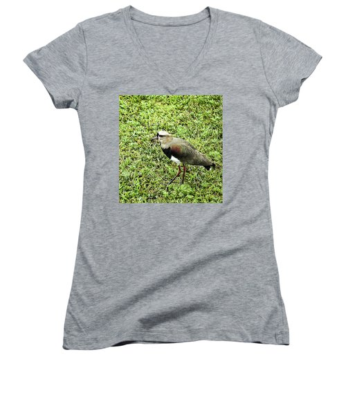 Southern Lapwing Women's V-Neck T-Shirt (Junior Cut) by Norman Johnson