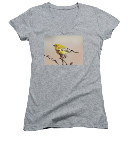 Spring Warbler 1 2017 Women's V-Neck T-Shirt