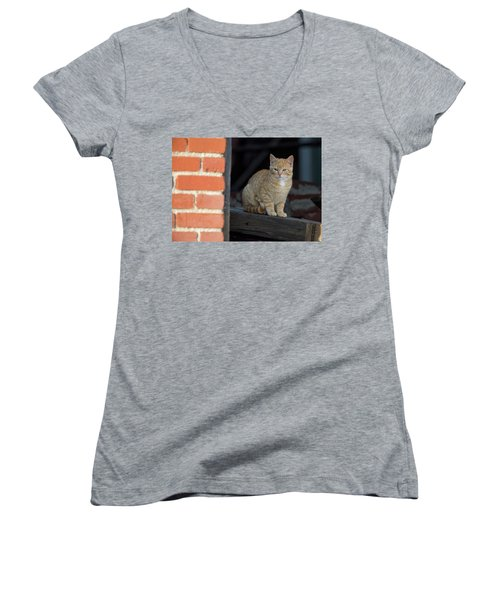 Street Cat Women's V-Neck T-Shirt (Junior Cut) by Scott Warner