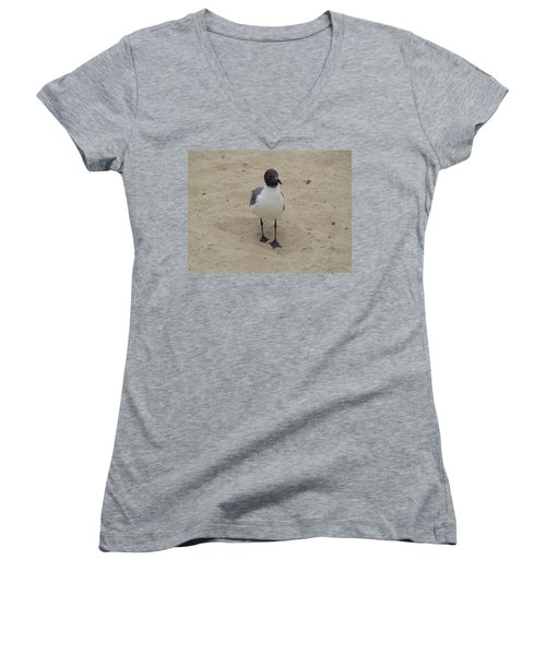 Women's V-Neck T-Shirt (Junior Cut) featuring the photograph Struttin' Seagull  by Charles Kraus