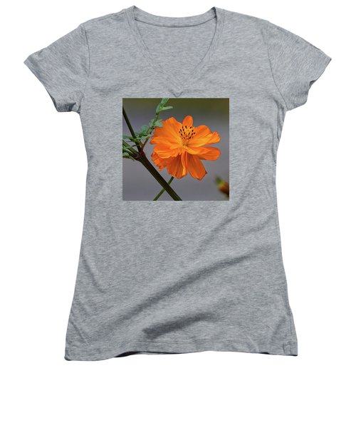 Sulfur Cosmos Women's V-Neck
