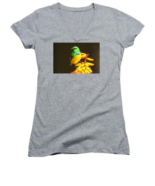 Sunbird Women's V-Neck T-Shirt (Junior Cut) by Betty-Anne McDonald