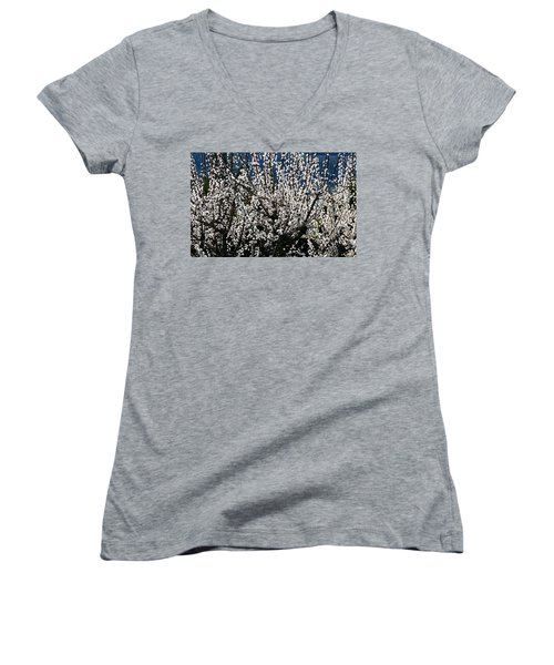 Sunlit Apricot Blossoms Women's V-Neck T-Shirt (Junior Cut) by Will Borden