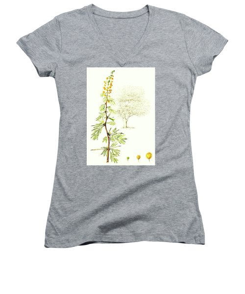 Women's V-Neck T-Shirt (Junior Cut) featuring the painting Sweet Thorn Botanical Illustration by Heidi Kriel