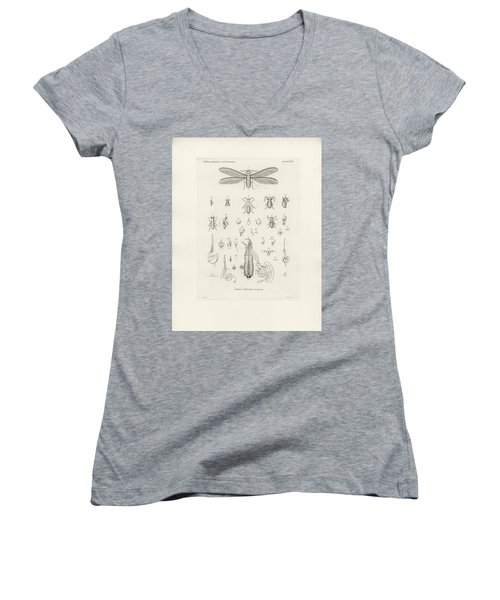 Termites, Macrotermes Bellicosus Women's V-Neck T-Shirt