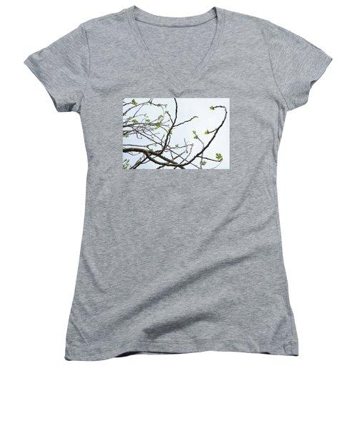 The Fig Tree Budding Women's V-Neck T-Shirt (Junior Cut) by Yoel Koskas