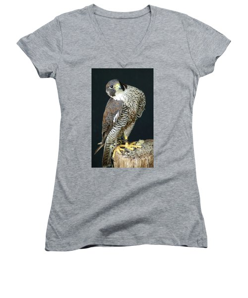The Proud Falcon Women's V-Neck T-Shirt