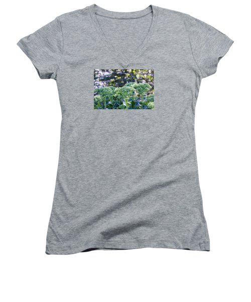 The Sedum Forest Women's V-Neck (Athletic Fit)