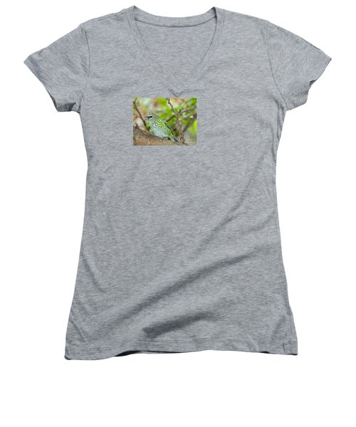 Women's V-Neck T-Shirt (Junior Cut) featuring the photograph The Spotted Tanager by Judy Kay