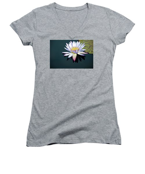 The Water Lily Women's V-Neck T-Shirt (Junior Cut) by David Sutton