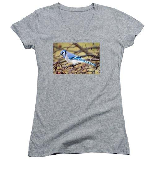 The Winter Blue Jay  Women's V-Neck T-Shirt