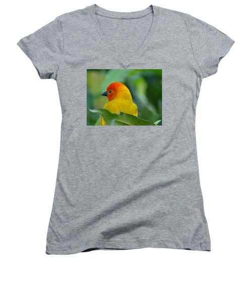 Through A Child's Eyes - Close Up Yellow And Orange Bird 2 Women's V-Neck (Athletic Fit)