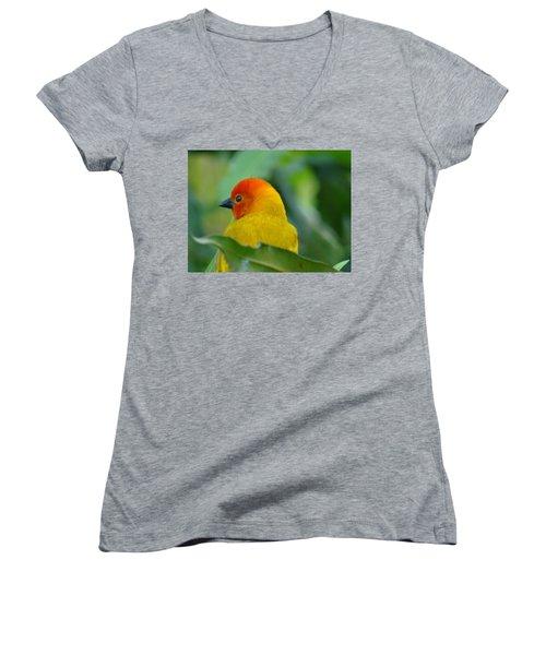 Through A Child's Eyes - Close Up Yellow And Orange Bird 2 Women's V-Neck T-Shirt