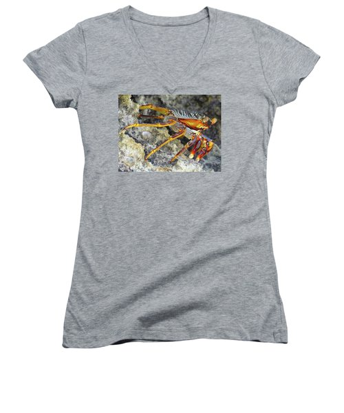 Turtle Bay Resort Watamu Kenya Rock Crab Women's V-Neck T-Shirt (Junior Cut) by Exploramum Exploramum
