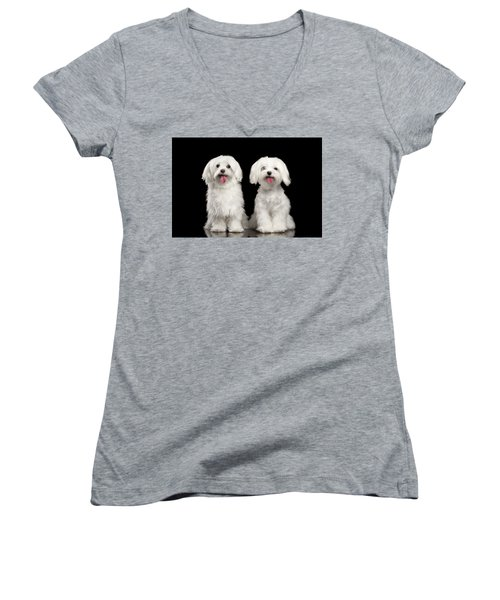 Two Happy White Maltese Dogs Sitting, Looking In Camera Isolated Women's V-Neck T-Shirt (Junior Cut) by Sergey Taran