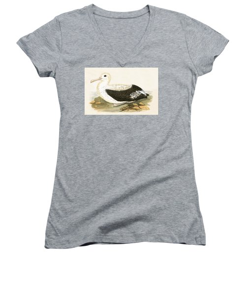 Wandering Albatross Women's V-Neck T-Shirt (Junior Cut) by English School