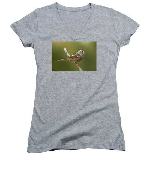 White-crowned Sparrow Women's V-Neck T-Shirt (Junior Cut) by Doug Herr