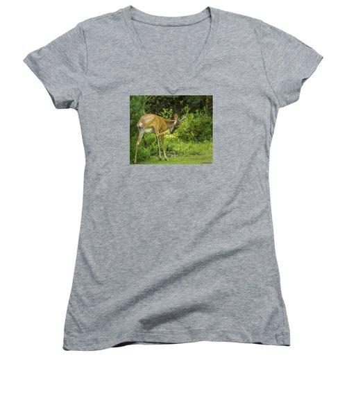 White Tailed Deer Scratching It's Nose Women's V-Neck T-Shirt (Junior Cut) by Ken Morris