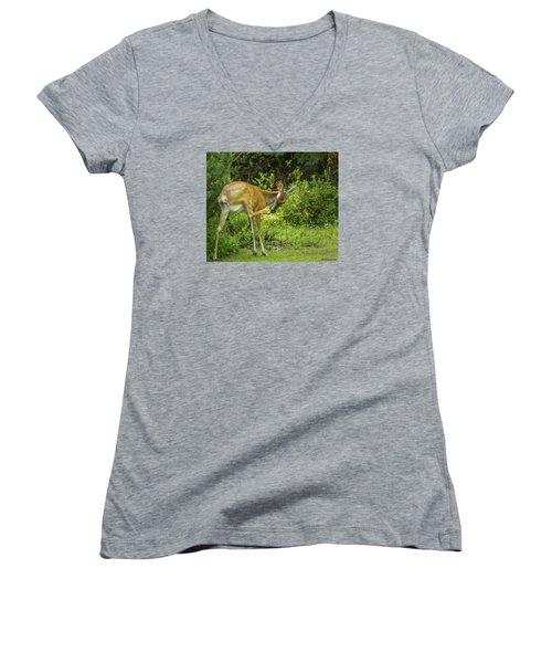 White Tailed Deer Scratching It's Nose Women's V-Neck (Athletic Fit)