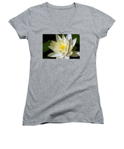 White Water Lily Women's V-Neck T-Shirt (Junior Cut) by Donna Bentley