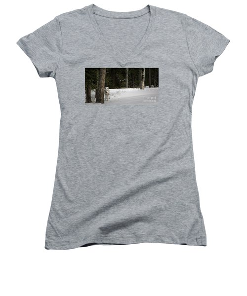 White Wolf Women's V-Neck T-Shirt (Junior Cut) by Brad Allen Fine Art