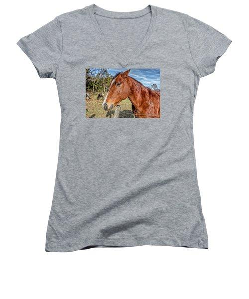 Wild Horse In Smoky Mountain National Park Women's V-Neck T-Shirt