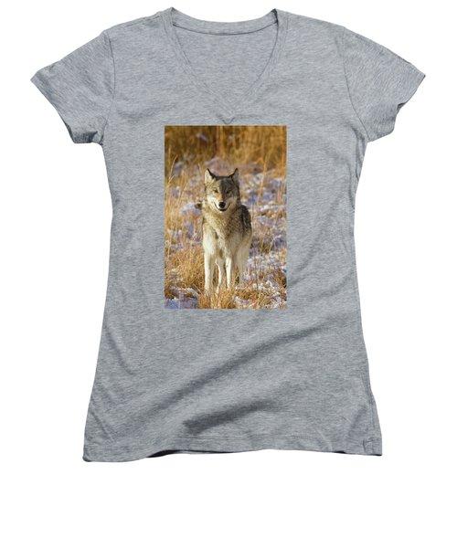 Wild Wolf Portrait Women's V-Neck