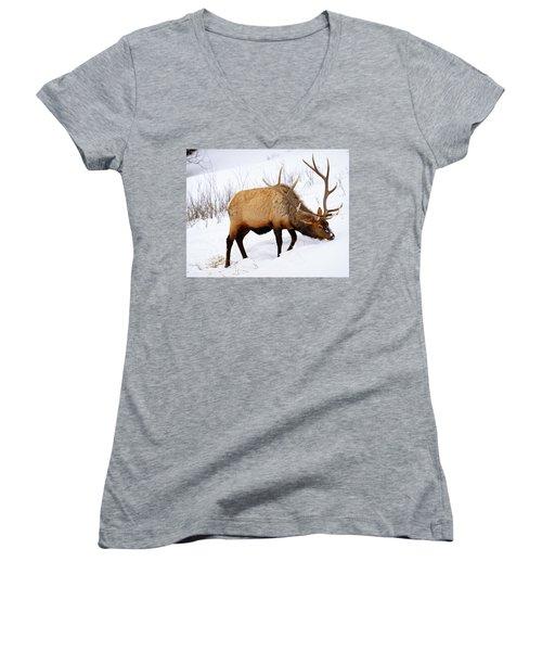 Winter Bull Women's V-Neck T-Shirt (Junior Cut) by Greg Norrell