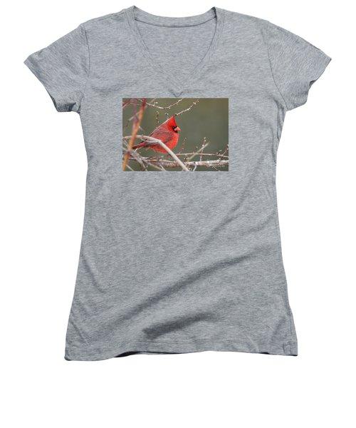 Winter Cardinal Women's V-Neck T-Shirt
