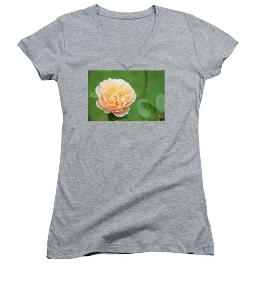 Yellow Rose In December Women's V-Neck T-Shirt (Junior Cut) by Kelly Hazel