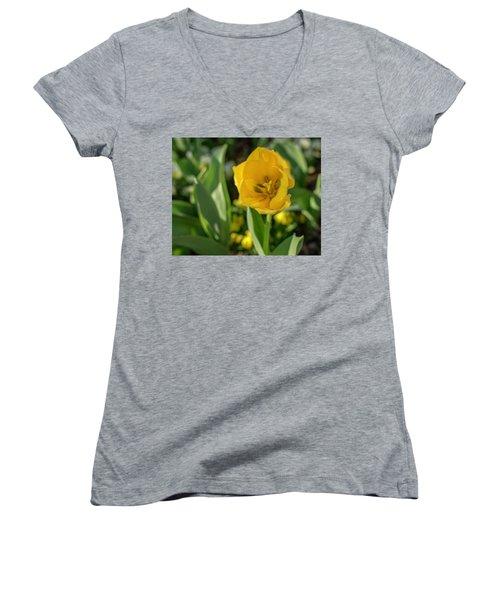 Yellow Tulip Women's V-Neck