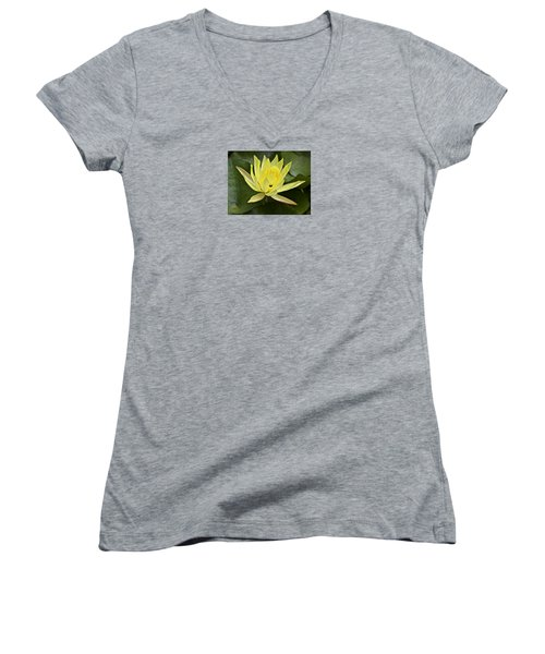 Yellow Waterlily With A Visiting Insect Women's V-Neck