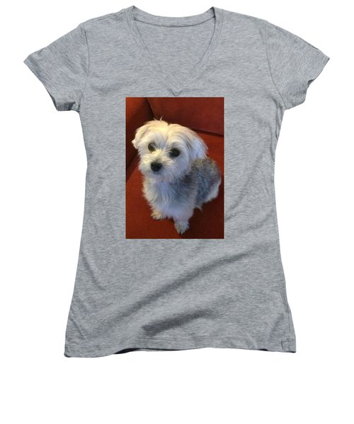 Yorkshire Terrier Women's V-Neck T-Shirt (Junior Cut) by Robin Regan