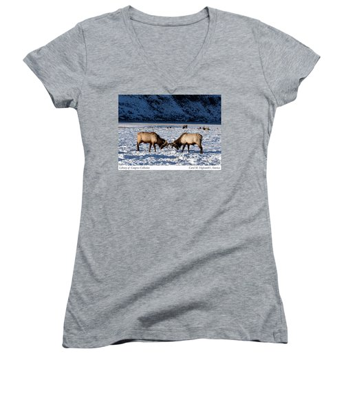 Young Bull Elk In Jackson  Hole In Wyoming Women's V-Neck T-Shirt (Junior Cut) by Carol M Highsmith