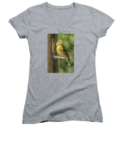 Young Goldfinch Women's V-Neck T-Shirt