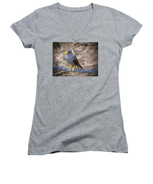 Young Myna Women's V-Neck T-Shirt (Junior Cut) by Judy Kay