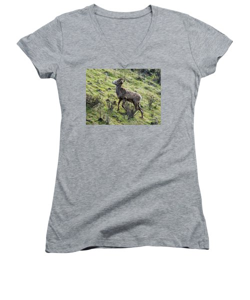 Women's V-Neck T-Shirt (Junior Cut) featuring the photograph Young Ram Climbing by Mike Dawson