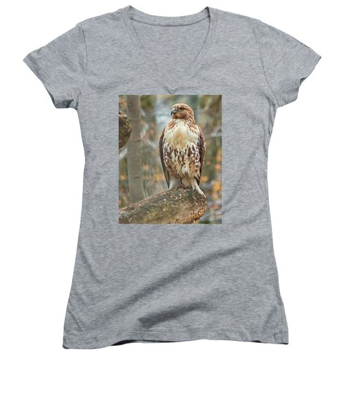 Young Red Tailed Hawk  Women's V-Neck