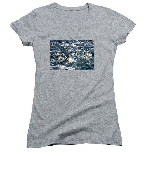 A Raft Of Sea Lions Women's V-Neck