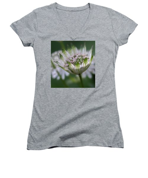 Astrantia Women's V-Neck