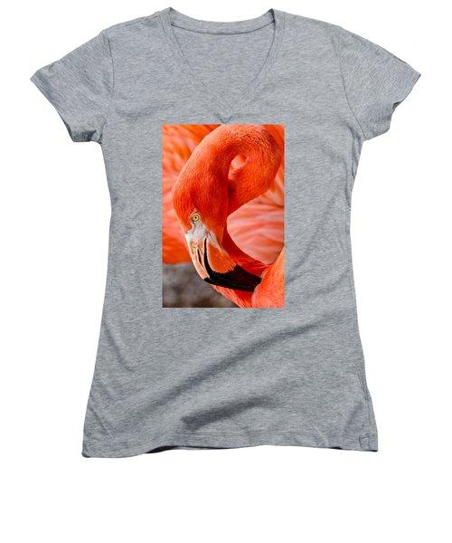 Caribbean Flamingo Women's V-Neck