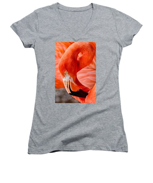 Caribbean Flamingo Women's V-Neck