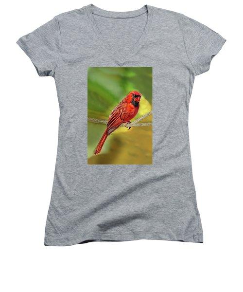 Male Cardinal Headshot  Women's V-Neck